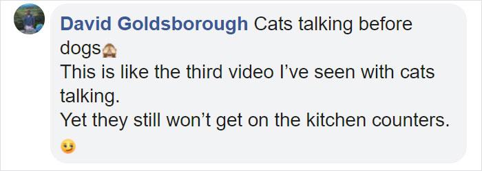 gato dice bien hola comentar david
