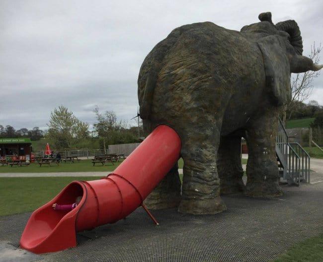 ese diseño de deslizamiento hacia abajo del elefante-ano-diseño más divertido falla