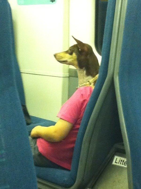 persona con cabeza de perro
