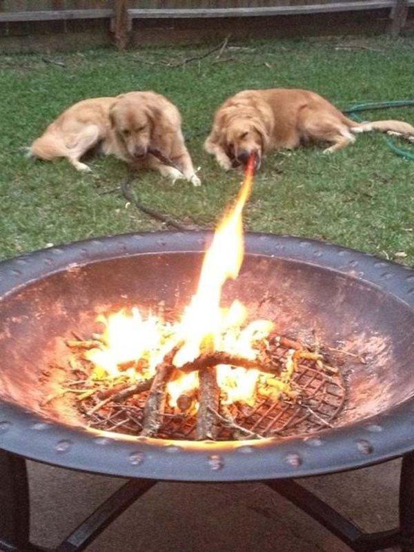 es como un perro respirando fuego