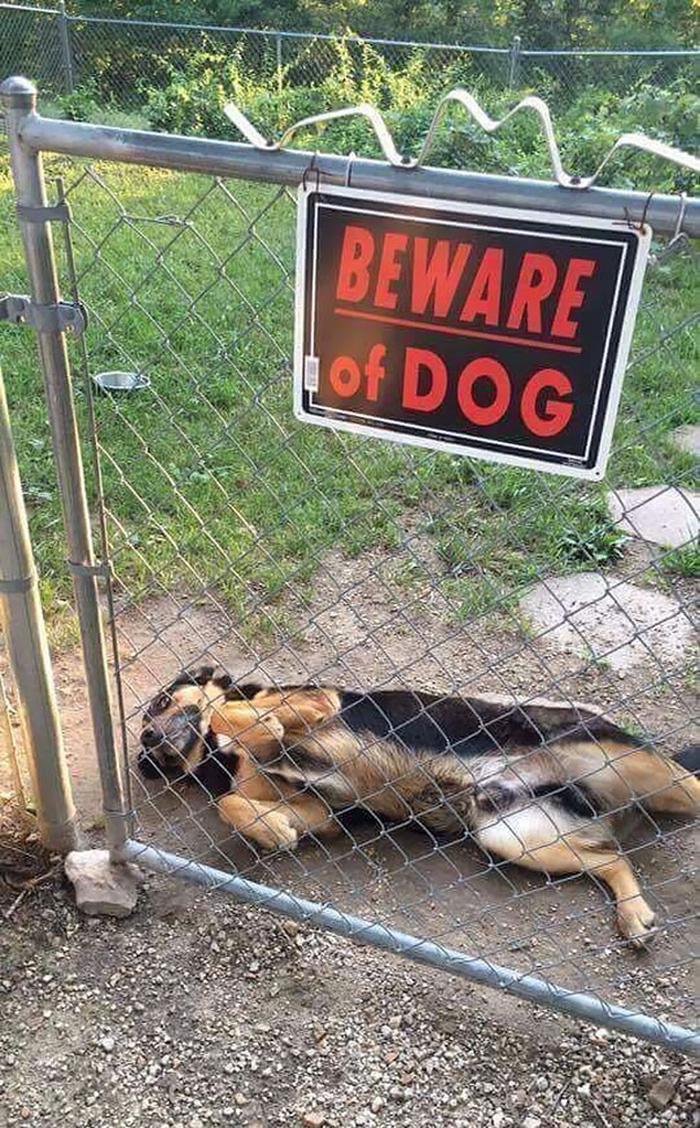 tenga cuidado con un letrero de perro acostado de espaldas
