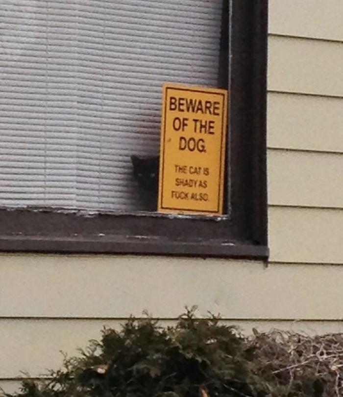 señal de advertencia de gato sombrío