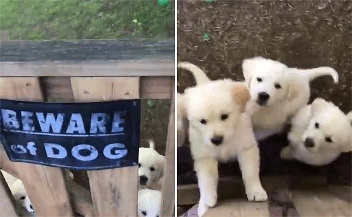 lindos cachorros detrás de una señal de advertencia