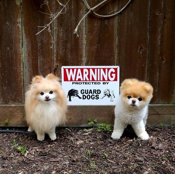 lindos cachorros de guardia