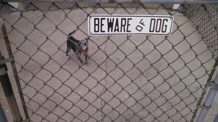 tenga cuidado con los lindos cachorros