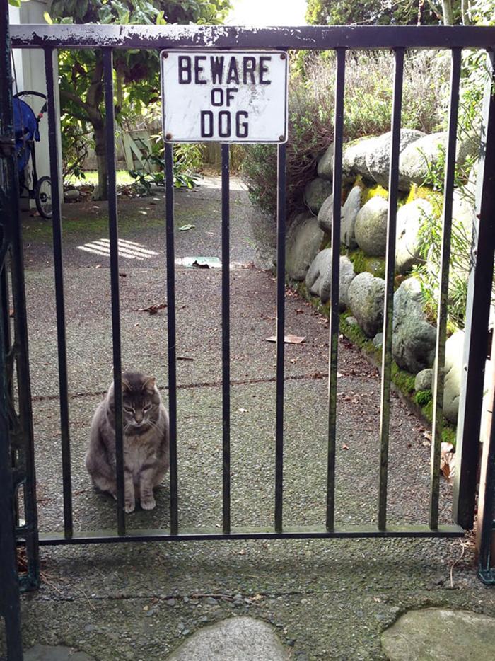 cuidado con el perro gato