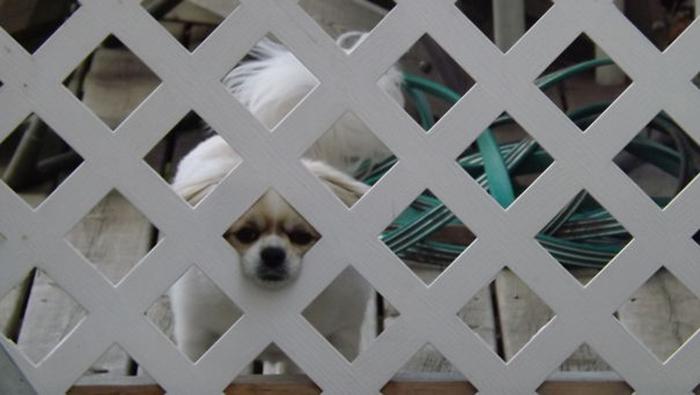 lindo perrito escaldado de la valla