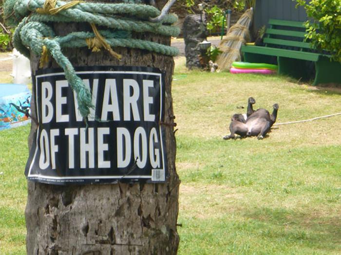 Perro tonto detrás de tener cuidado con el signo del perro