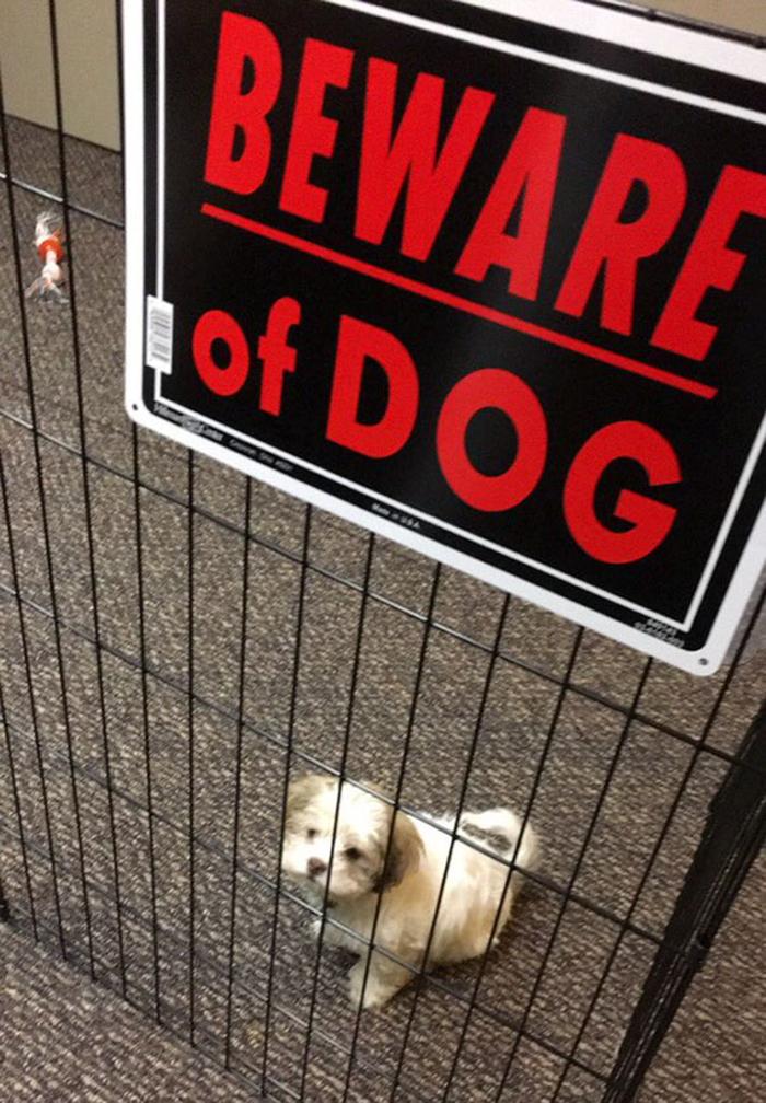 tenga cuidado con los perros cachorros