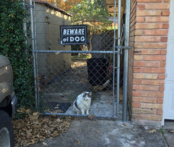 gato garda