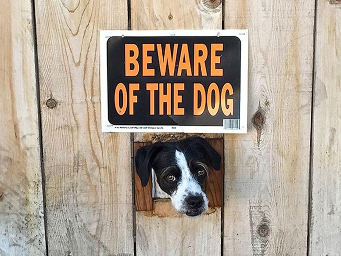 cabeza de cachorro fuera de la cerca
