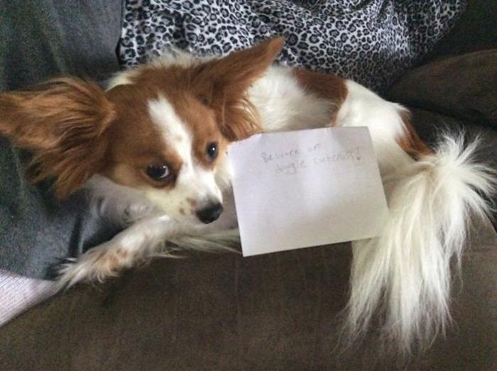 ser consciente de un cartel de perro en papel