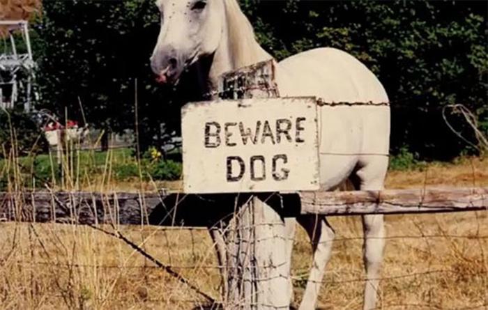 caballo detrás de la señal de advertencia