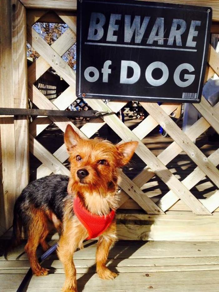 tenga en cuenta un peligroso letrero de cachorro