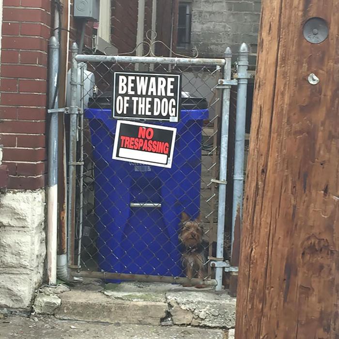 cuidado con la presencia de un perro de señales sutil