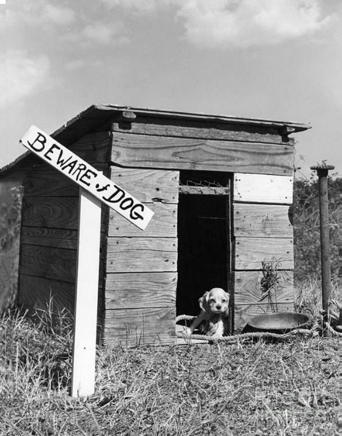 ser consciente de una casa de perro