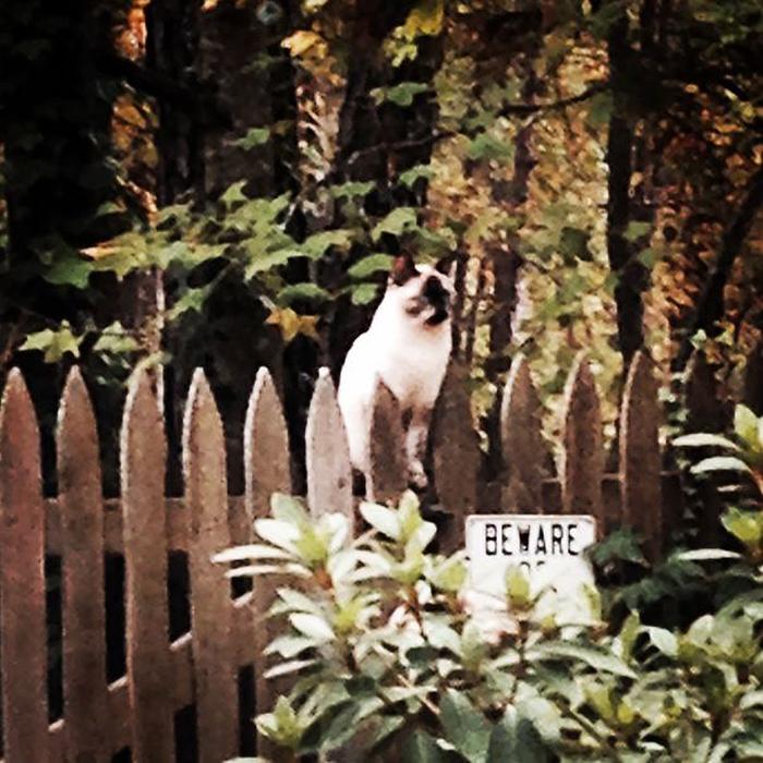 gato de guardia en una valla