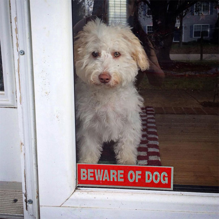 Tenga cuidado con la puerta del letrero de perro