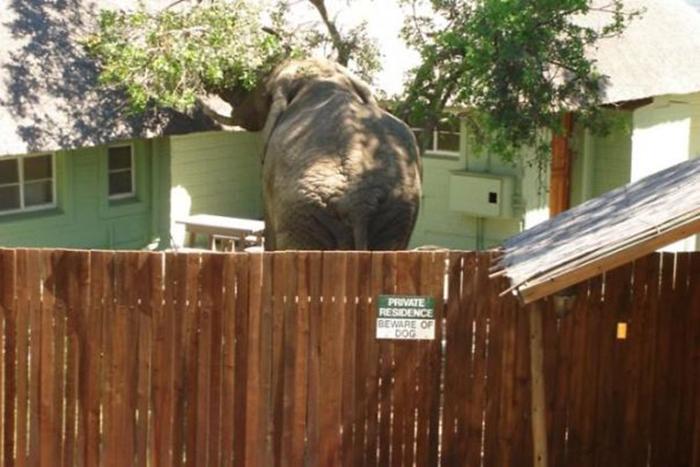elefante detrás de una señal de advertencia