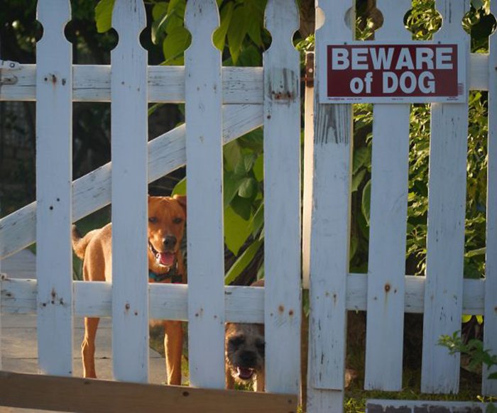 Tenga cuidado con los lindos guardias de perros