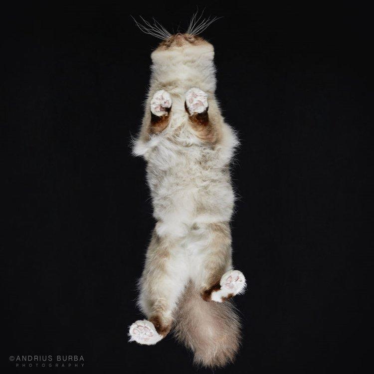 burba-fotos-de-gatos-tomadas-desde-abajo-bigotes