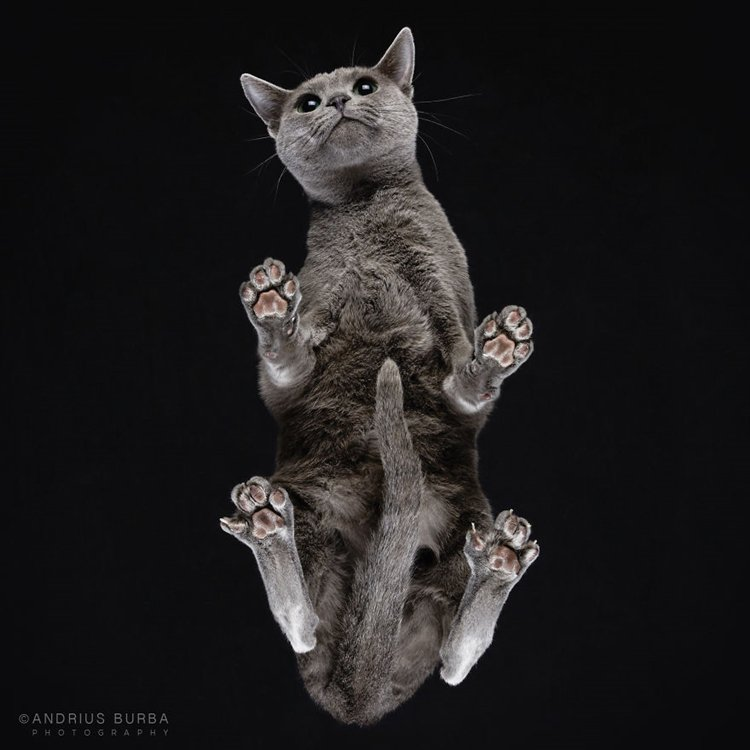 burba-fotos-de-gatos-tomadas-desde-abajo-la-cola
