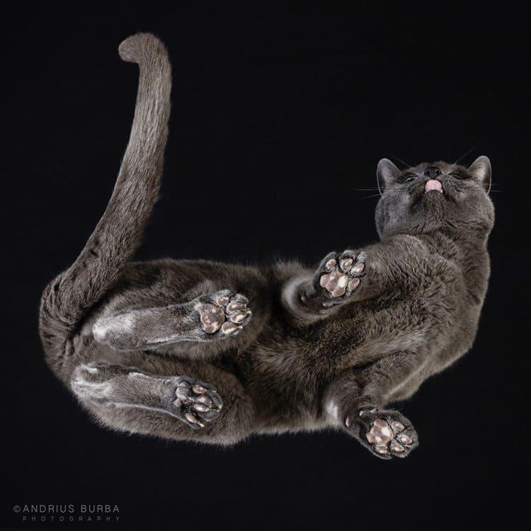 burba-fotos-de-gatos-tomadas-desde-abajo-idioma