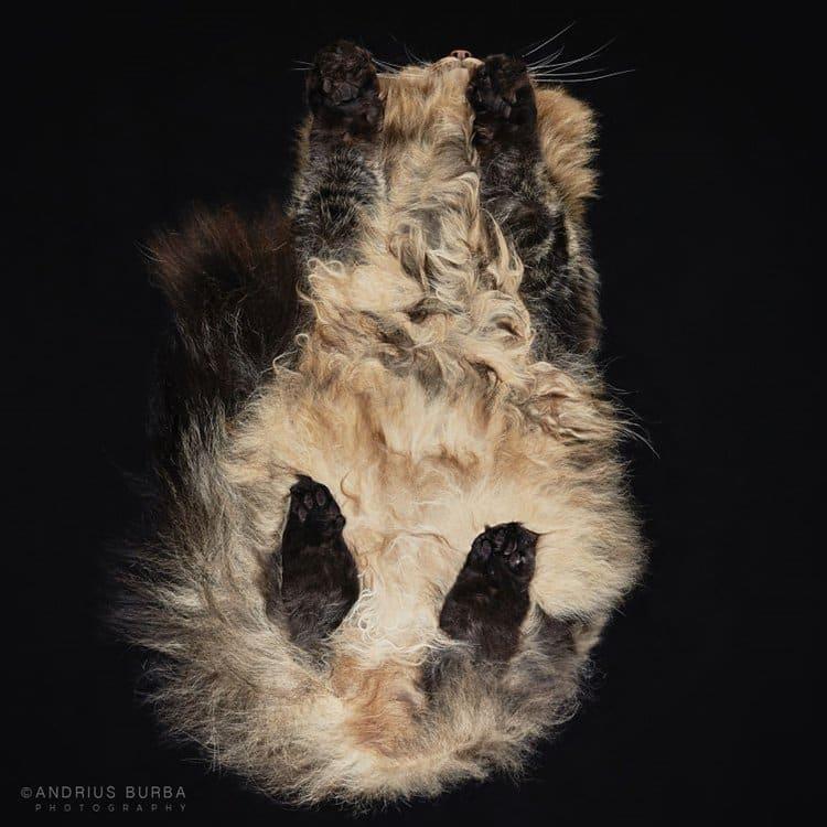burba-fotos-de-gatos-tomadas-desde-abajo-pelusa