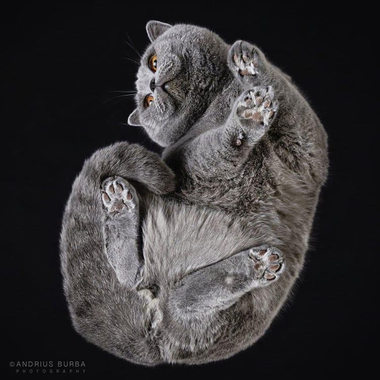 burba-fotos-de-gatos-tomadas-desde-abajo-gris