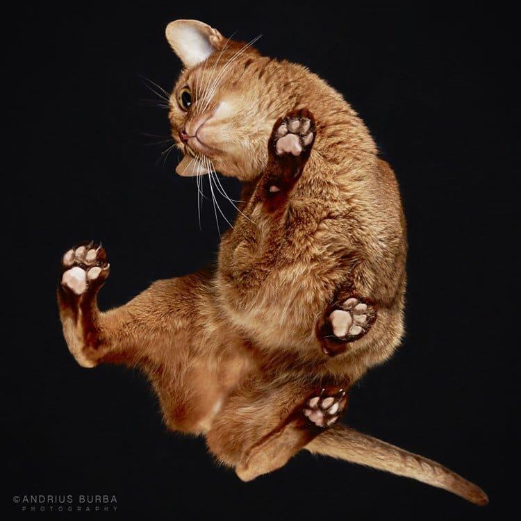 curva burba-fotos-de-gatos-construida-desde-abajo-curva