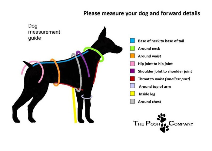 guía de medidas para perros